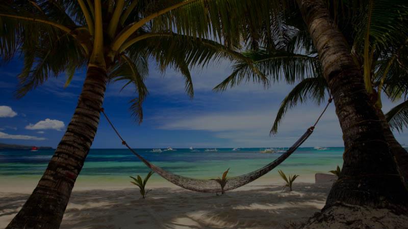 hammock under coconut trees