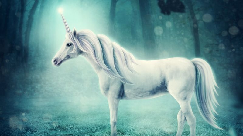 white unicorn in a forest